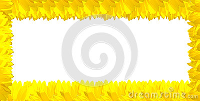 Yellow Sunflower on the white background