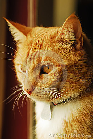 Free Yellow Tabby Cat In Window Stock Photography - 4355112