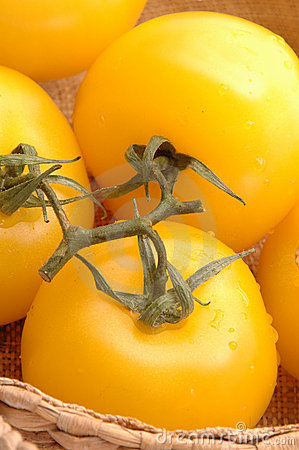 Yellow tomatoes 2