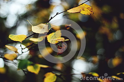 Yellow Tree Leaf Under White Sky During Daytime In Shallow Focus Photography Free Public Domain Cc0 Image