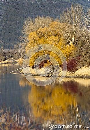 Free Yellow Tree Reflections. Stock Photos - 36597843