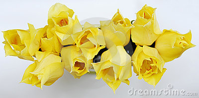 Yellow tulips 13