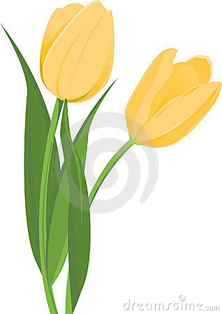 Free Yellow Tulips Stock Images - 8644174