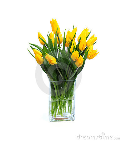 Free Yellow Tulips Royalty Free Stock Photography - 9334757