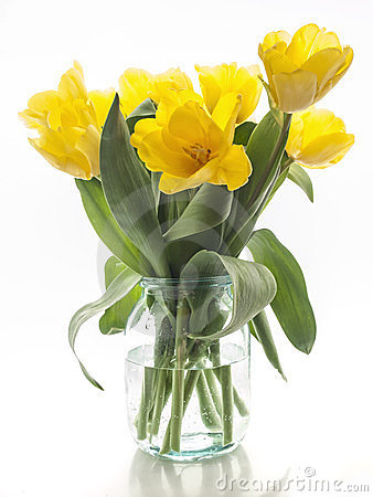 Yellow tulips bouquet on a white background