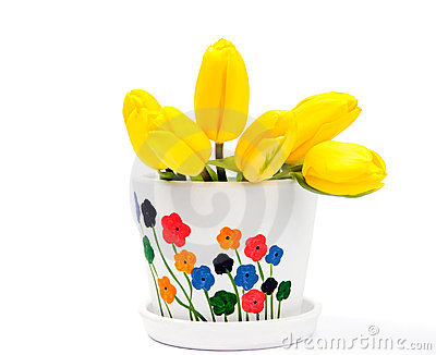 Yellow tulips in flowerpot