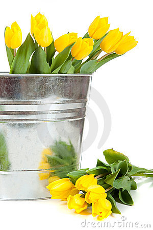 Yellow tulips in a metal pail on white