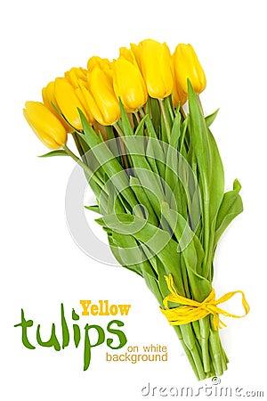 Free Yellow Tulips On A White Stock Image - 51199261