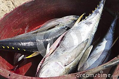 Yellow tuna fish