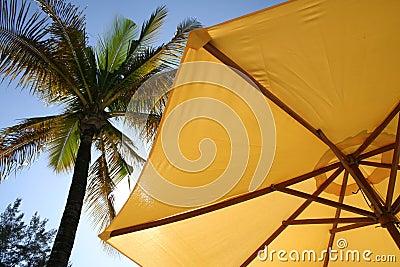 yellow umbrella palm tree