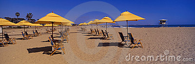 Yellow umbrellas and beach chairs