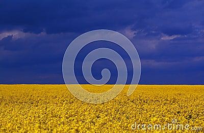 Yellow vivid flowers
