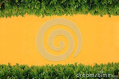 Yellow wall and bush