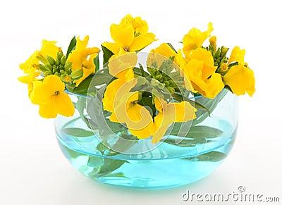 Yellow wallflowers