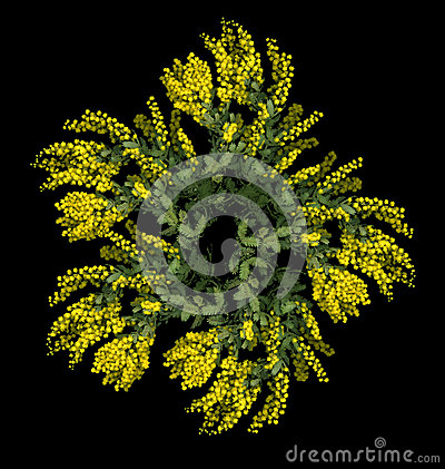 Yellow Wattle Flower
