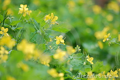Yellow Weeds 6
