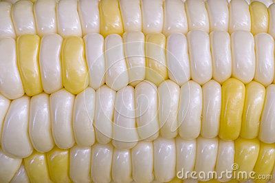 Yellow and White Corn on the Cob