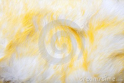 Yellow and White Fur