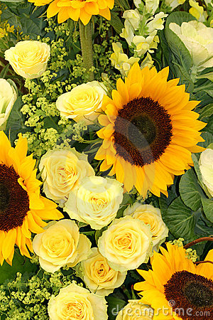 Free Yellows Stock Photography - 180252