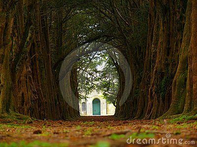 Yew alley