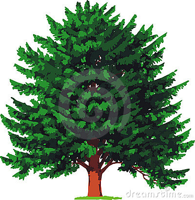 yew tree. Vector Cartoon Illustration