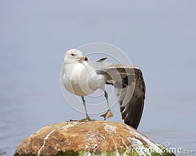 Yoga del pájaro