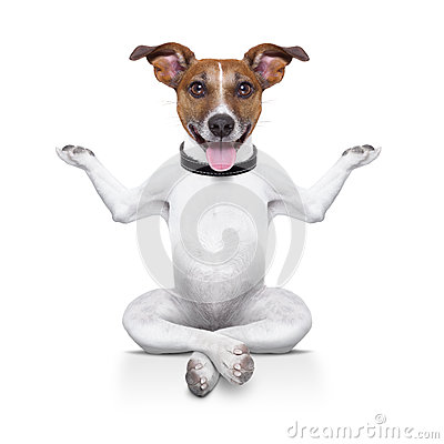 Free Yoga Dog Royalty Free Stock Photos - 32646098