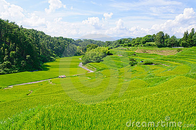 Yokone rice fields
