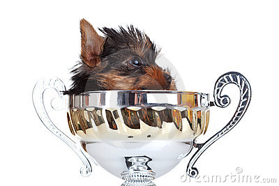 Yorkie toy hidding in a trophy