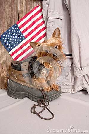 Free Yorkie Waiting For My Master Royalty Free Stock Photography - 41162157