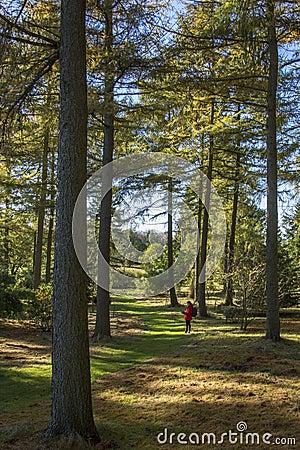 The Yorkshire Arboretum - England