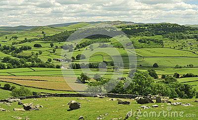 Yorkshire Dales, fields and meadows
