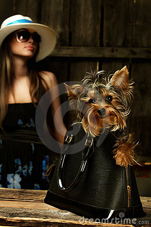 Yorkshire Terrier dog in bag