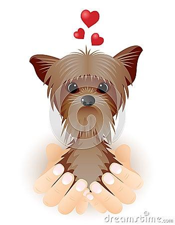 Yorkshire Terrier in love.
