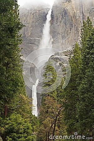 Yosemite Falls and Ponderosa Forest