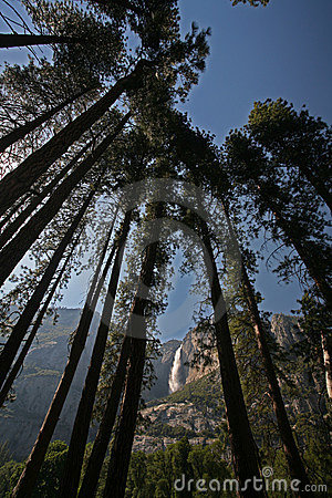 Yosemite Falls through trees