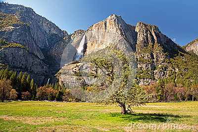Yosemite meadow with tree