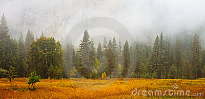 Yosemite Valley Scene