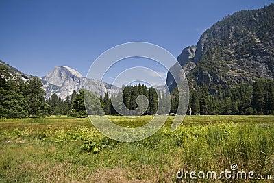 Yosemity