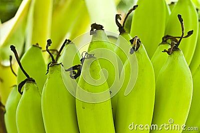 Young bananas.