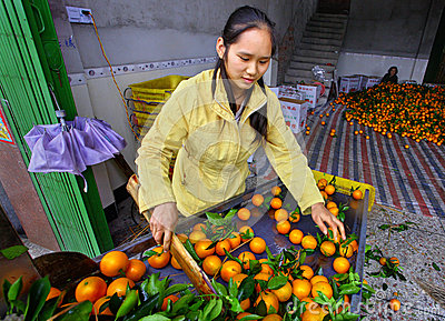 Young, beautiful Chinese woman working on the line sorting orang Editorial Stock Photo