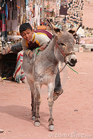 Young Bedouin boy climbing on his donkey Editorial Photo
