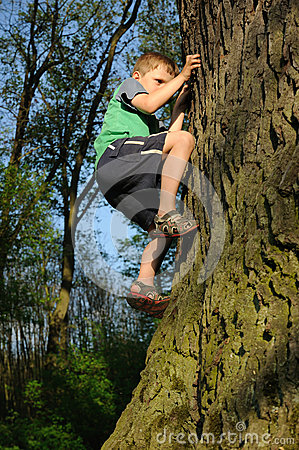 Free Young Boy Climbing Tree Royalty Free Stock Image - 24735196