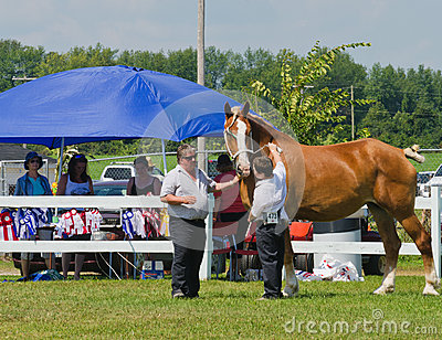 Proud Young Boy with Heavy Horse  Editorial Stock Photo