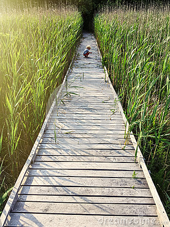 Free Young Boy On Wooden Dock Stock Photos - 81058193