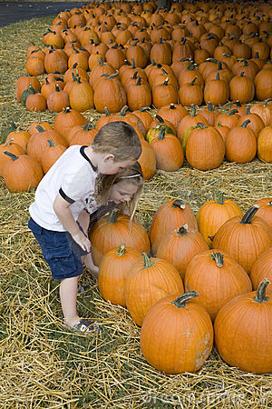 Young boy in pumpkin patch
