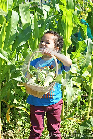 Young boy and sweetcorn