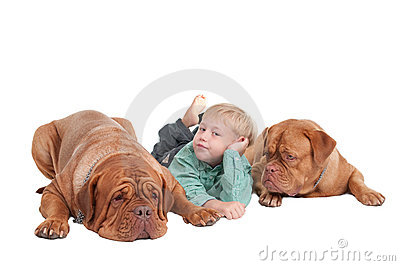 Young boy and two big dogues de bordeaux