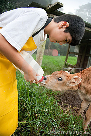Young boy working on Costa Rican dairy farm