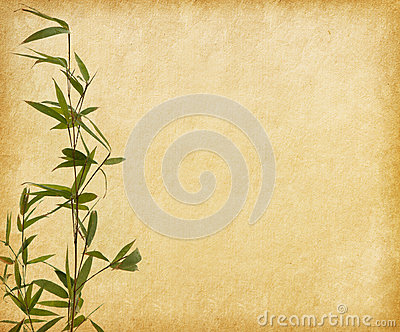 Young branches of a bamboo on old paper background.